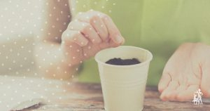Planting seed in a cup