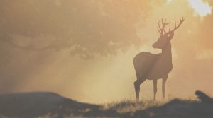 The Stolen Stag